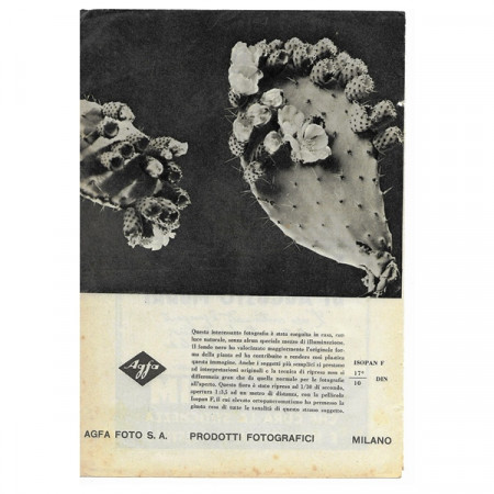 """1943 * Pubblicità Originale Fotografia """"AGFA Foto - Cactus"""" Bianco/Nero"""