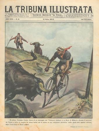 """1931 * Magazine Historique Original """"La Tribuna Illustrata (N°42) - Ciclista Attaccato Da Bufali"""""""